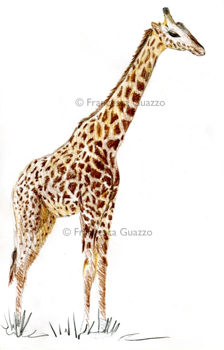 Preliminari amorosi: le giraffe!